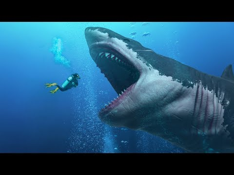 Did They Find an Alive Megalodon In the Mariana Trench?