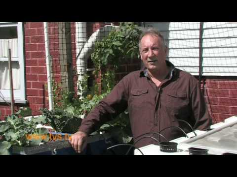 Backyard Aquaponics in Gerringong