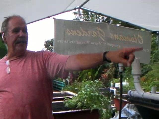 Hawaiian Backyard Aquaponic System
