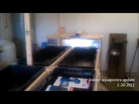Indoor Aquaponics - Fish tank and grow beds update