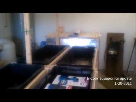 Indoor Aquaponics - Fish tank and grow beds update