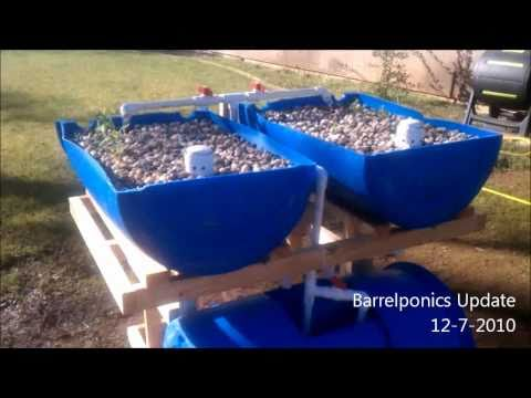 Barrel Aquaponics Update 12-7-2010
