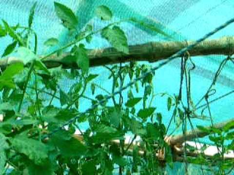 Urban Food Garden Update Kolkata  7th March 2011