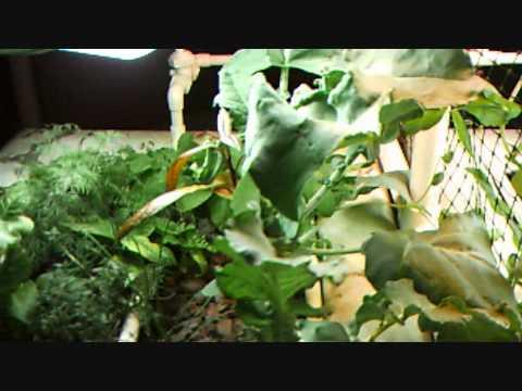 the basement garden part 4.wmv