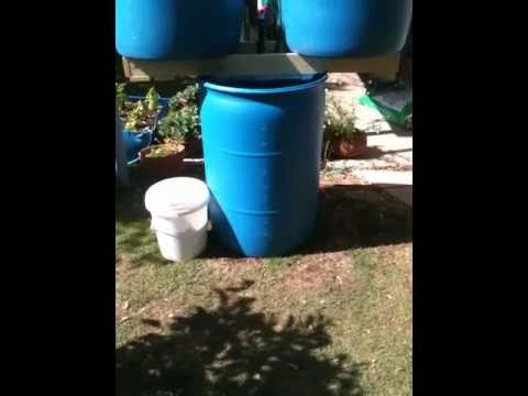 New Two Barrel Aquaponic  System and Growth Update