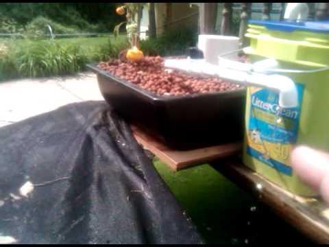 Aquaponics update 5/25/2011.3GP