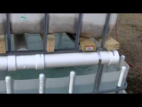 IBC tote Aquaponics system update 2/2/2011