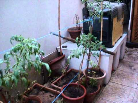 Homemade Aquaponics and container garden update 10 Sept (Flooded due to rain!)