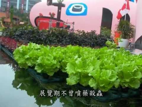 生態水培教學-戶外水培池(會下雨的)outdoors aquaponics
