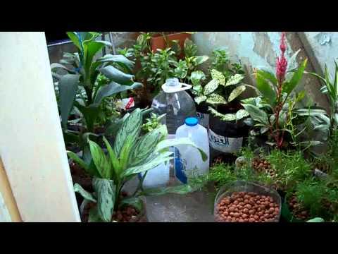 Self Watering Garden Jeddah - 7 July 2011