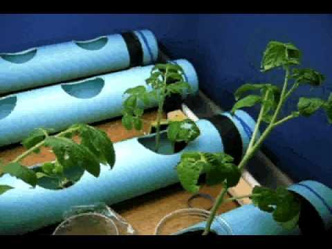 Grow room NFT Aquaponic system
