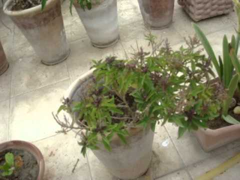 Homemade Aquaponics update 03 Aug