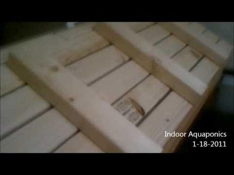 Indoor Aquaponics fish tank and grow beds