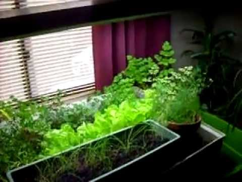 My First Indoor Aquaponics Garden
