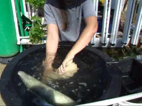 Making Lufa Sponges 2011.wmv