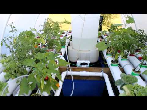 solar powered aquaponics hoosier garden Part 4 Update