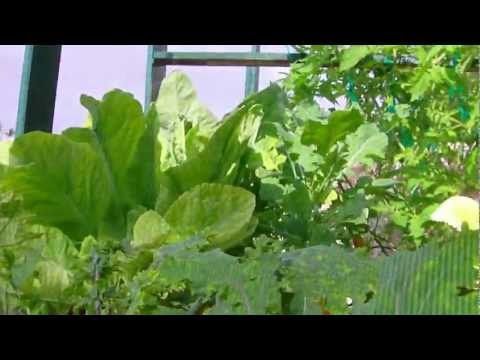 The Growzay Aquaponic System  10-24-11