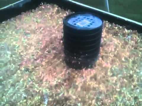 My aquaponics greenhouse