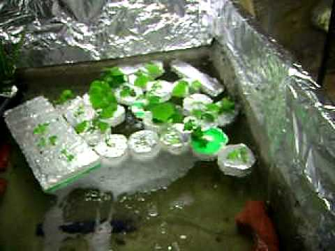 Part 14 Aquaponic system on a budget update 2012