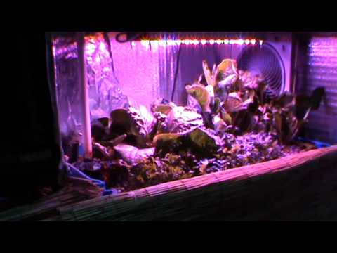 Aquaponic Lab Update