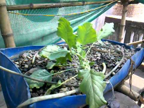 Urban Food Garden Update 3rd April 2012