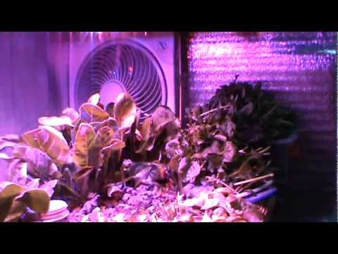 Aquaponic Lab Harvesting Arugula