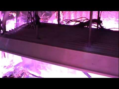 Aquaponic Lab