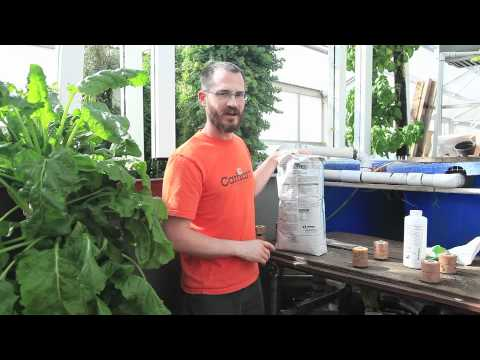 Bringing up pH levels in your aquaponic system - Bright Agrotech