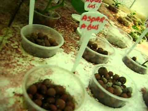 Aquaponics update32 May 7-12,video 001.AVI