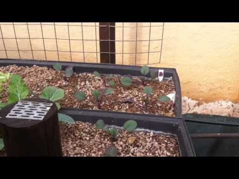 Eco Owl Aquaponics Update June 2012