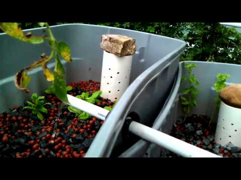 Levi's Backyard Aquaponics Experiment