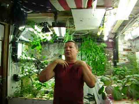 Aquaponics update41 June 5-12