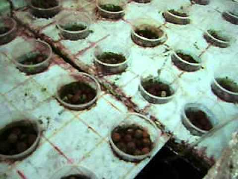 Aquaponics update 35 April-20-12