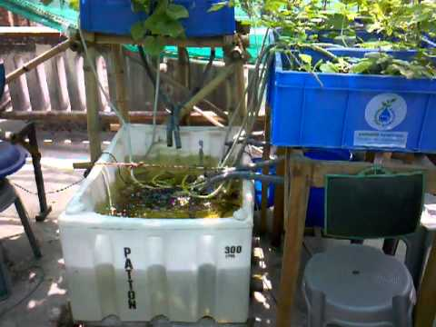 Urban Food Garden Update May 3  2012