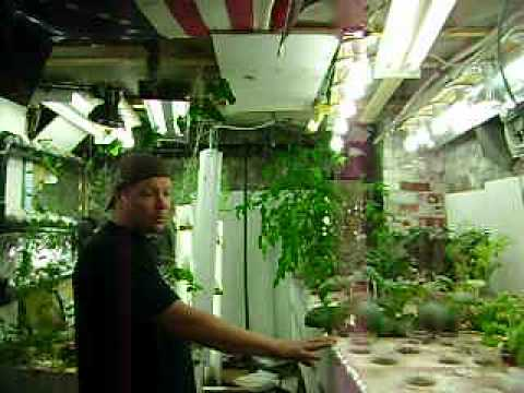 Aquaponics update38 May 9-12