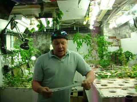 Aquaponics update 36 April-26-12