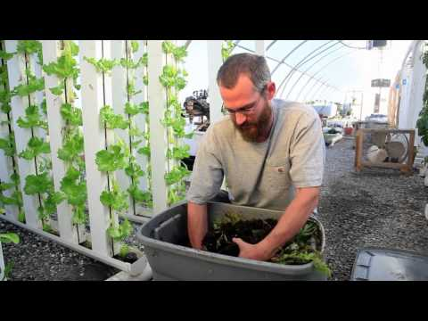 Redworms & Vertical Farming - Bright agrotech