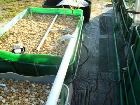 Aquaponics Hints