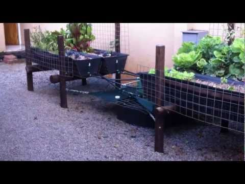 EcoOwl Aquaponics Update January 2013