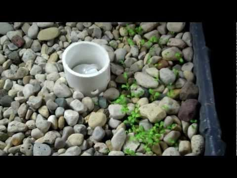 Homemade Aquaponic System - Flood and Drain