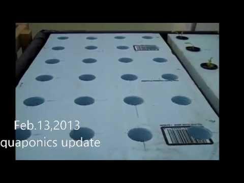 Feb.13,2013 Aquaponics System Update