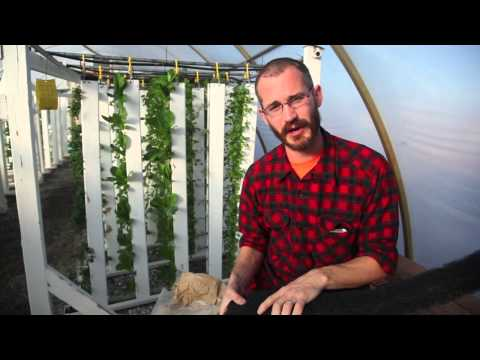 Aquaponics & Media - Bright Agrotech