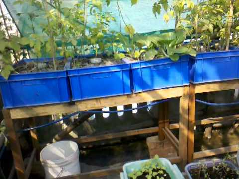 Food Garden Update Dec 7 2012.