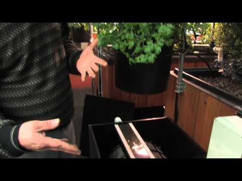 Drum Filters and Backyard Aquaponics