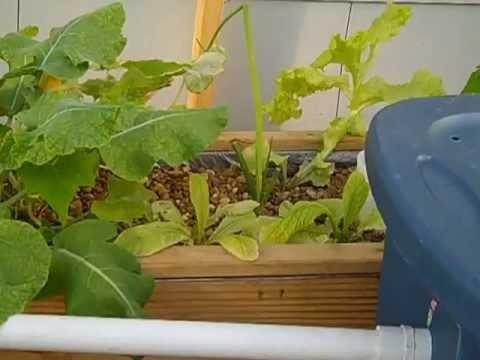 Aquaponics garden update dec.21,2012