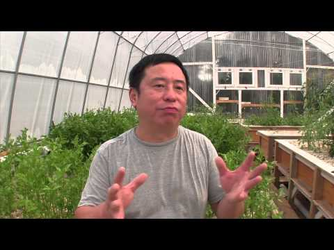 Peng's Aquaponics Introduction