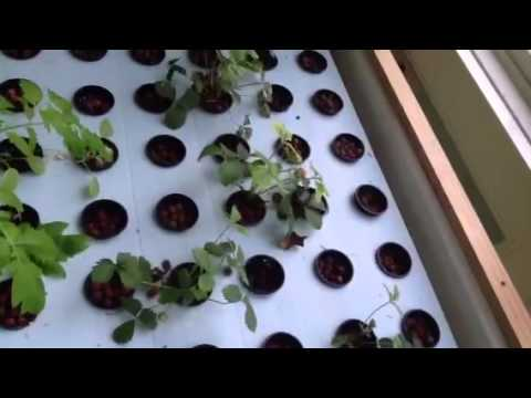 Aquaponics backyard/ family system