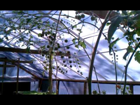 Aquaponic Greenhouse Update 4/6/13