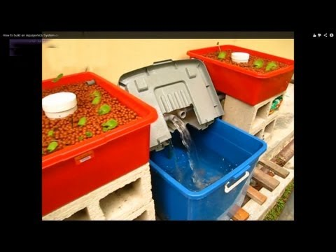 A begginer's Guide to building a Home Aquaponic System on a Low Budget HD