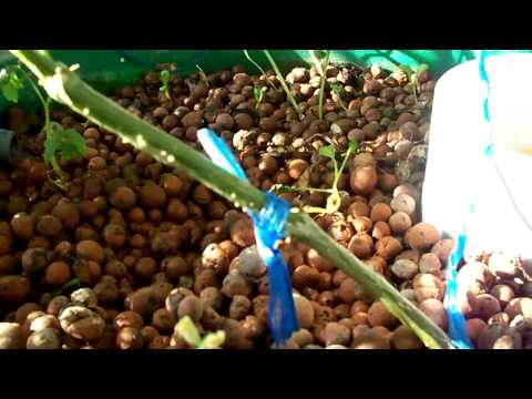 Aquaponics and Gardening in Jeddah
